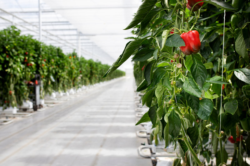 AGF software GreenCommerce bij Royal Peppers