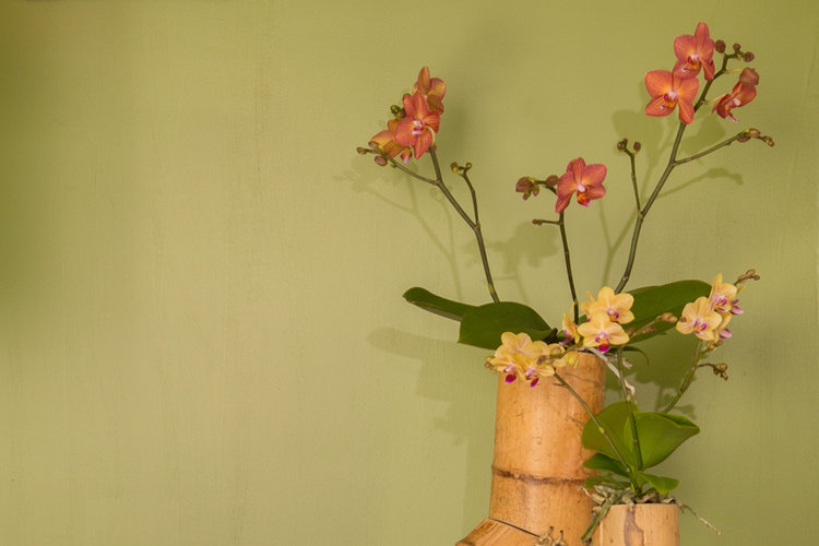 Urban Jungle Inspiratie : Orchids in an urban jungle style interior opti flor