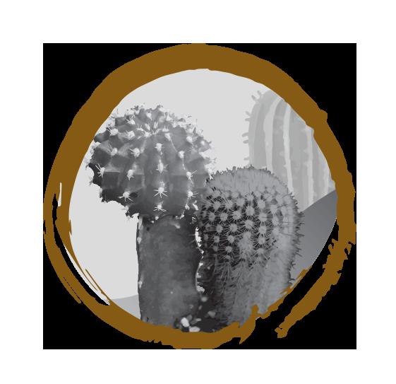 Static Orientalonline Nl Media Zencircle Cactus Rgb Png Karakter Bonsai